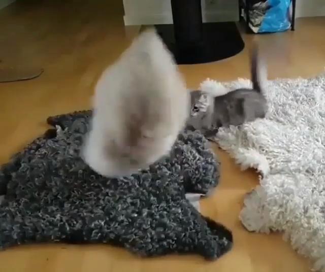 Photo of Divertidos gatos locos jugando