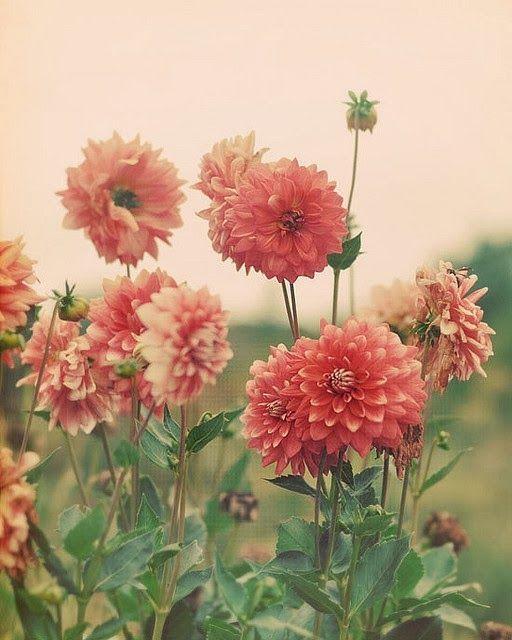 Flowers by Alice B.