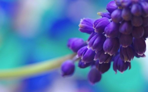 Flower Poems And Quotes Flowers Pics With Good Morning Images