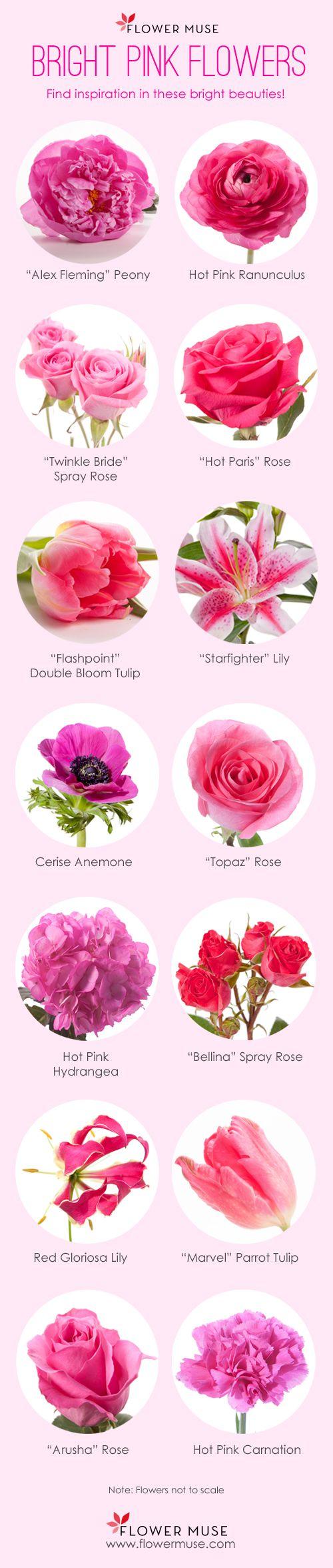 variedades de flores de color rosa fuerte para decoraci243n