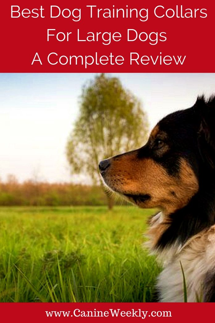Dog Training Ideas Each Interaction That Takes Place Between You