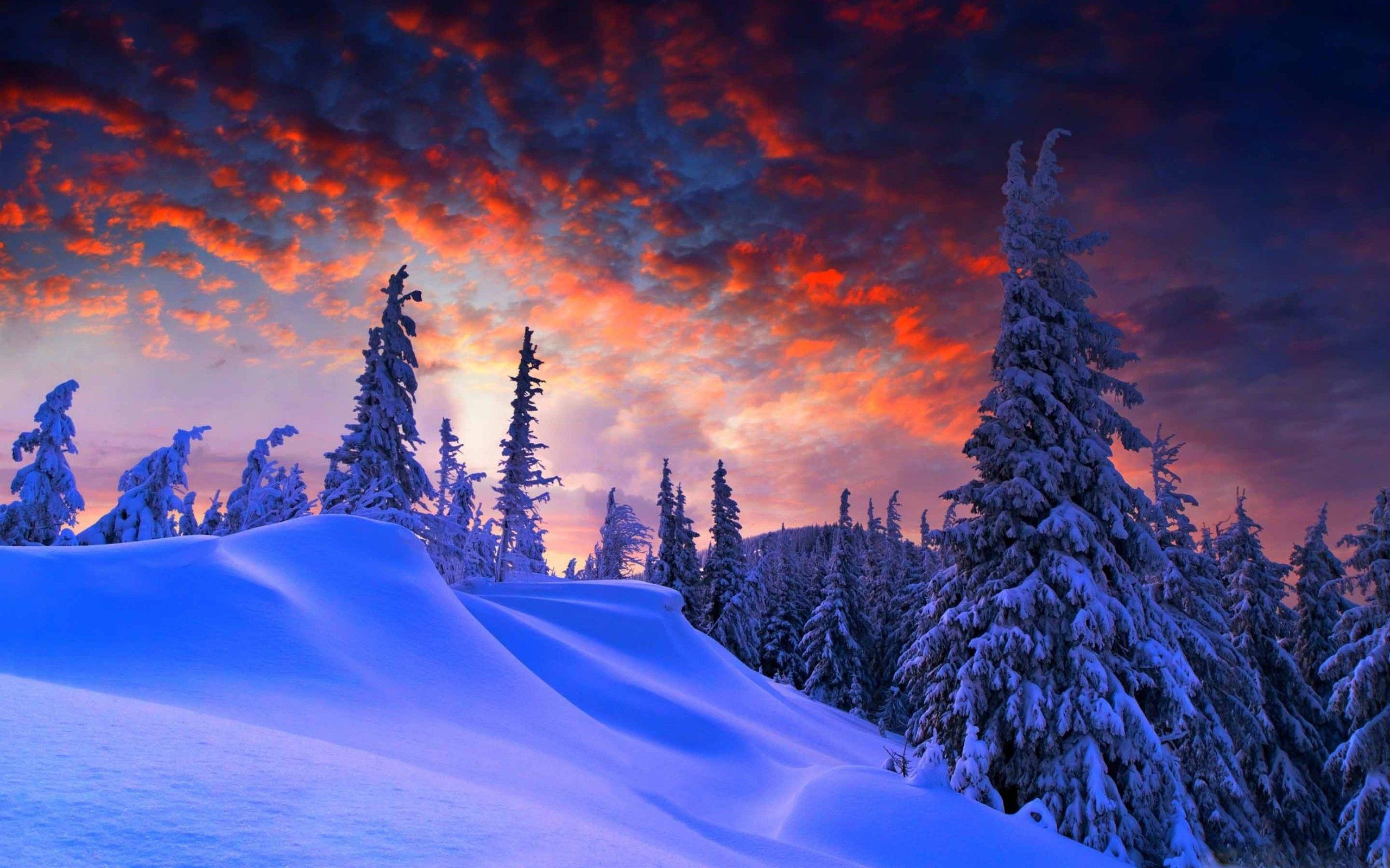 2560x1600 Pro 15 Inch 1440x900 Download Macbook Pro 15 Inch Retina 2880x1800 Download Winter Wallpaper Hd Winter Wallpaper Landscape Trees