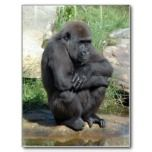 Really cute gorilla postcards.