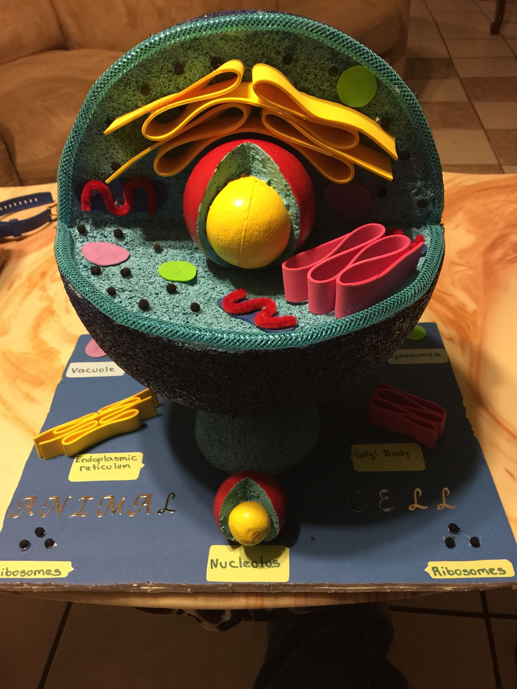 animal cell project alexa animal cell project 3d