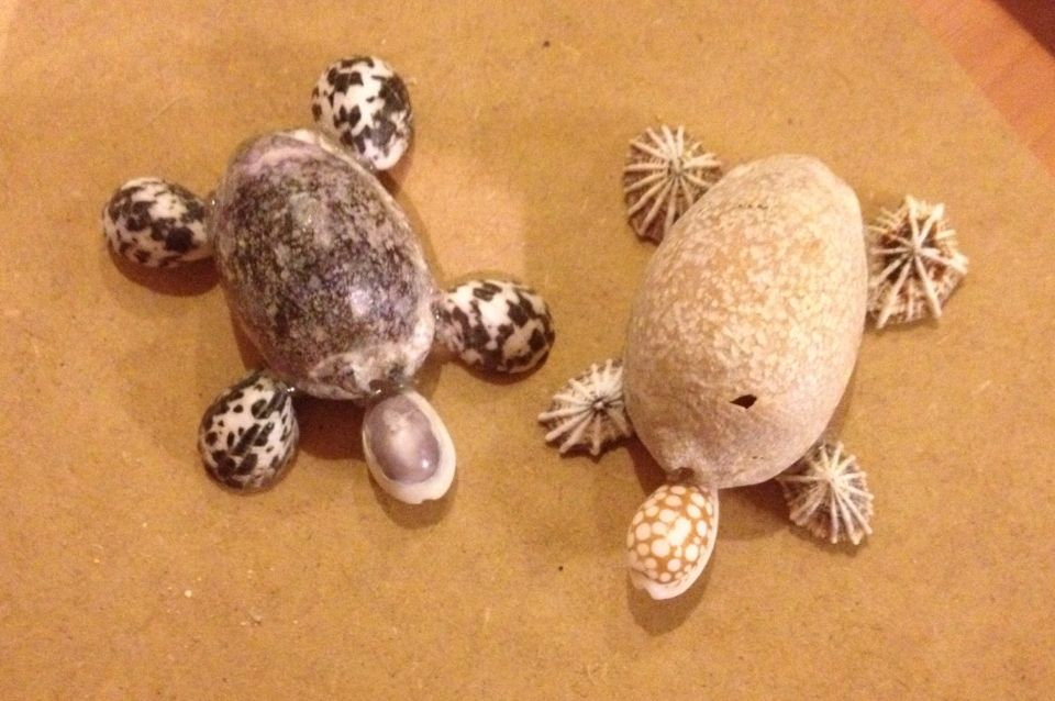 Shell turtles!