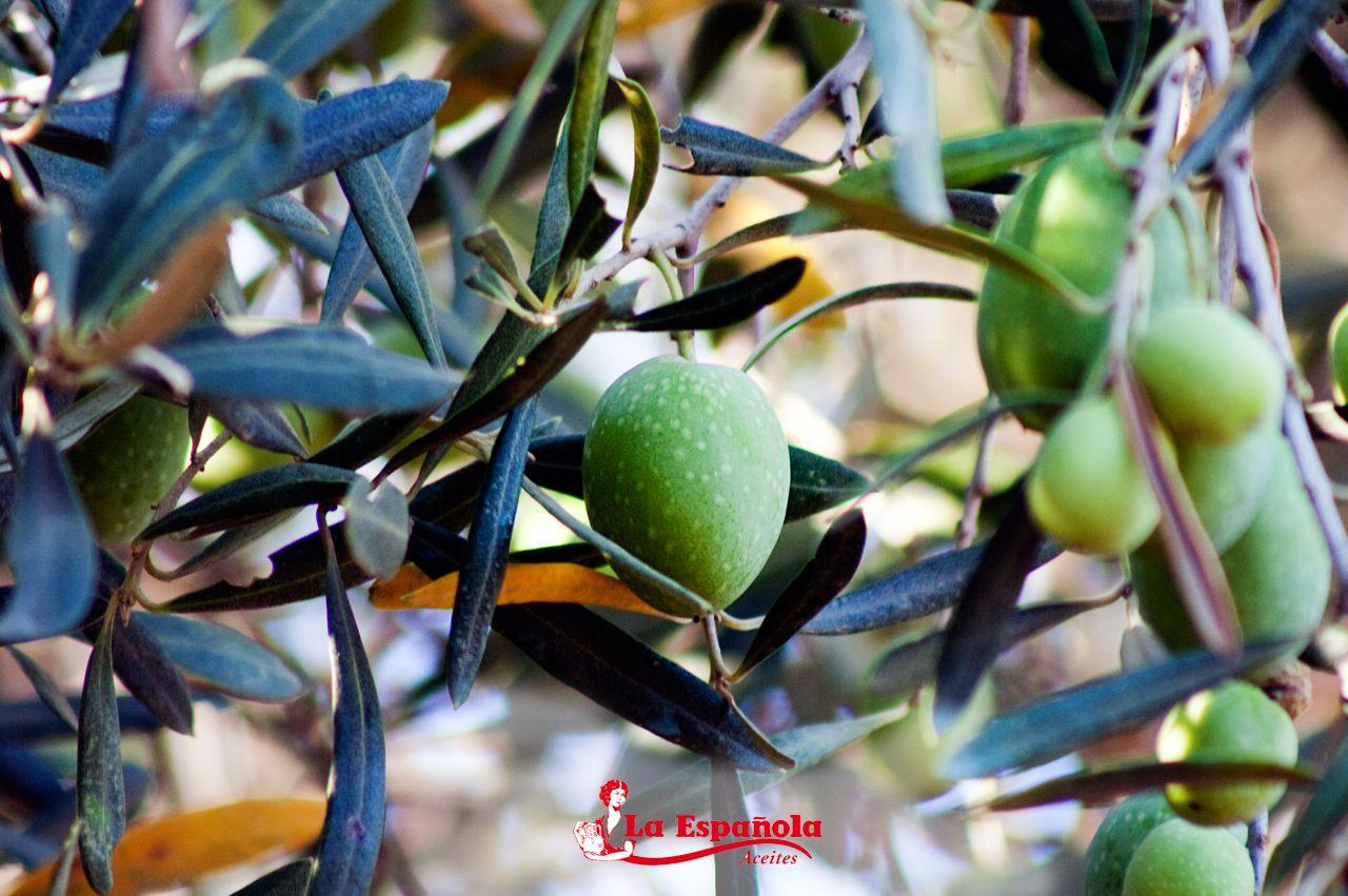 Aquí nacemos, en nuestro #fruto, en nuestras #tradiciones, en nuestra tierra.