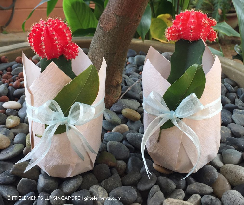 Potted Plant Gift Wrapping Gift wrapping services, Gift