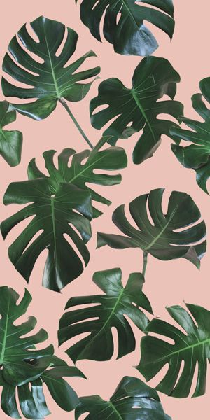 Monstera Leaf Final For Print Traditional Pink Green Jpg In 2020 Leaves Wallpaper Iphone Leaf Wallpaper Jungle Wallpaper