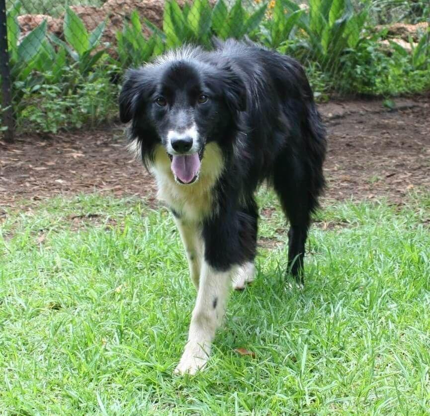 Pets For Adoption Pet Adoption Pets Animal Rescue
