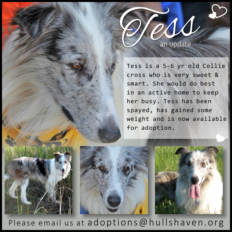 Tess is ready for her forever home!