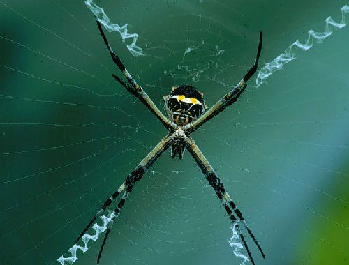 Why Spider Webs Can Be So Beautiful Spider Spider Web Beautiful