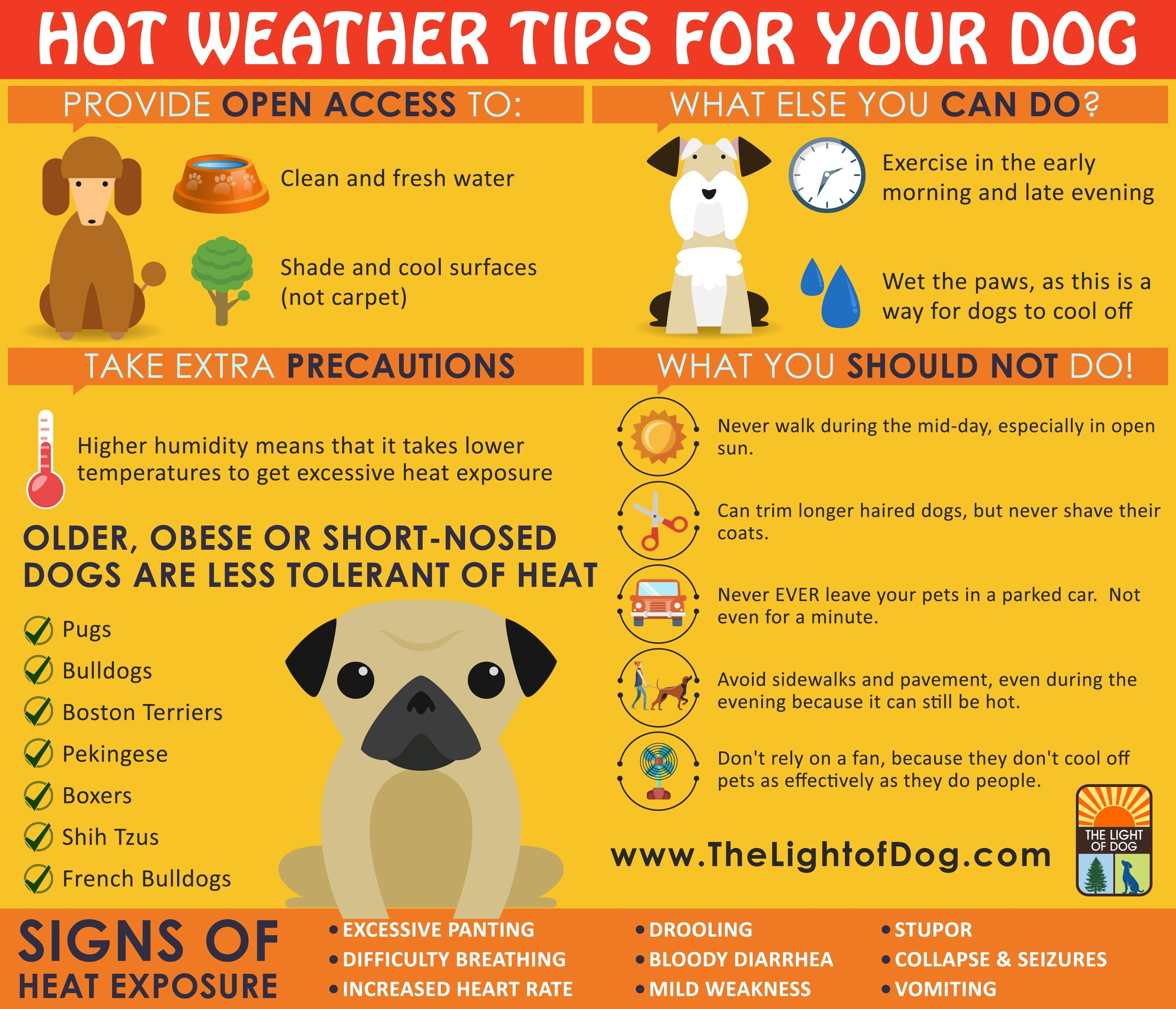 Hot Weather Tips For Your Dog Training Your Dog Dog Training