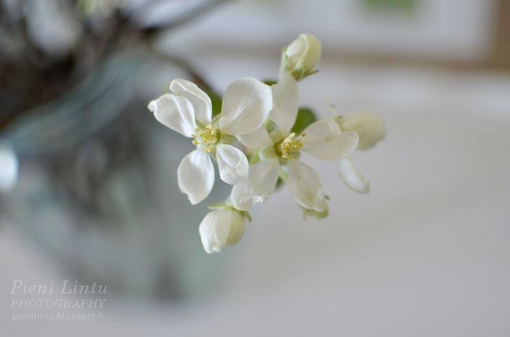 http://pienilintu.blogspot.fi/2014/04/appletree-blossoms.html