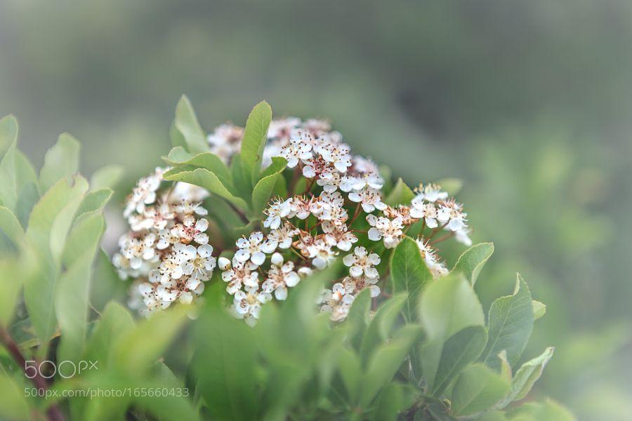 Olympos flora by lazpitsavas #nature #photooftheday #amazing #picoftheday