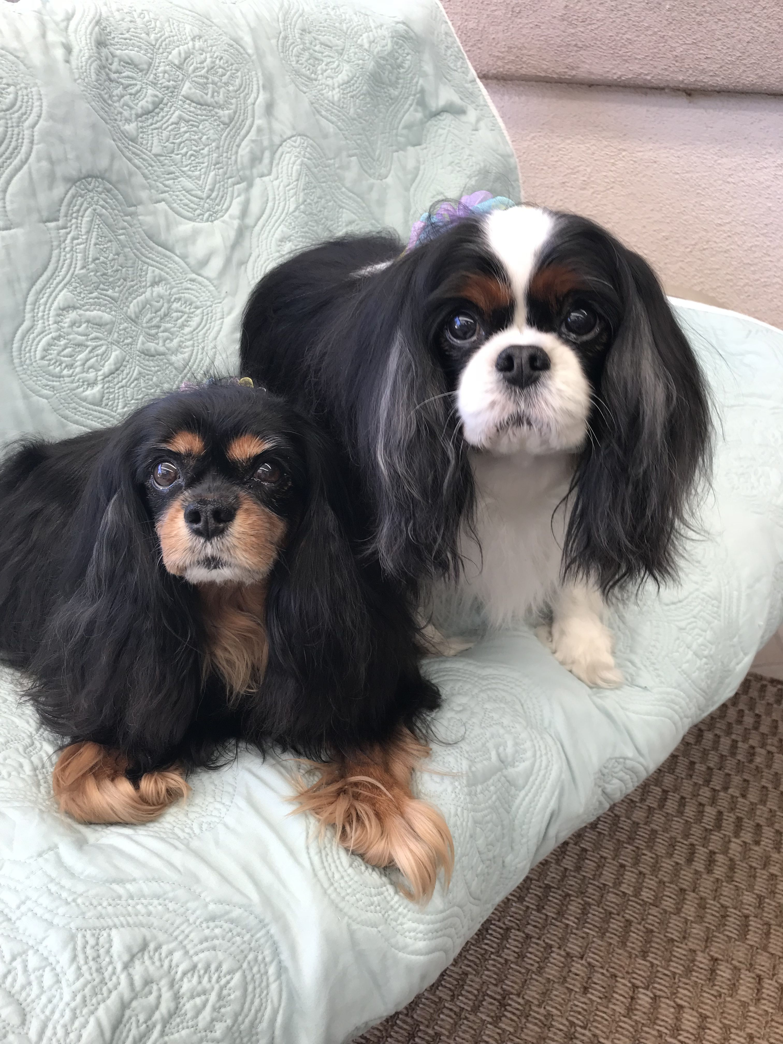 Sisters I Love Dogs Cavalier King Charles King Charles
