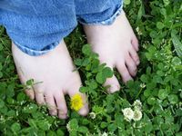 How to Grow a Clover Lawn