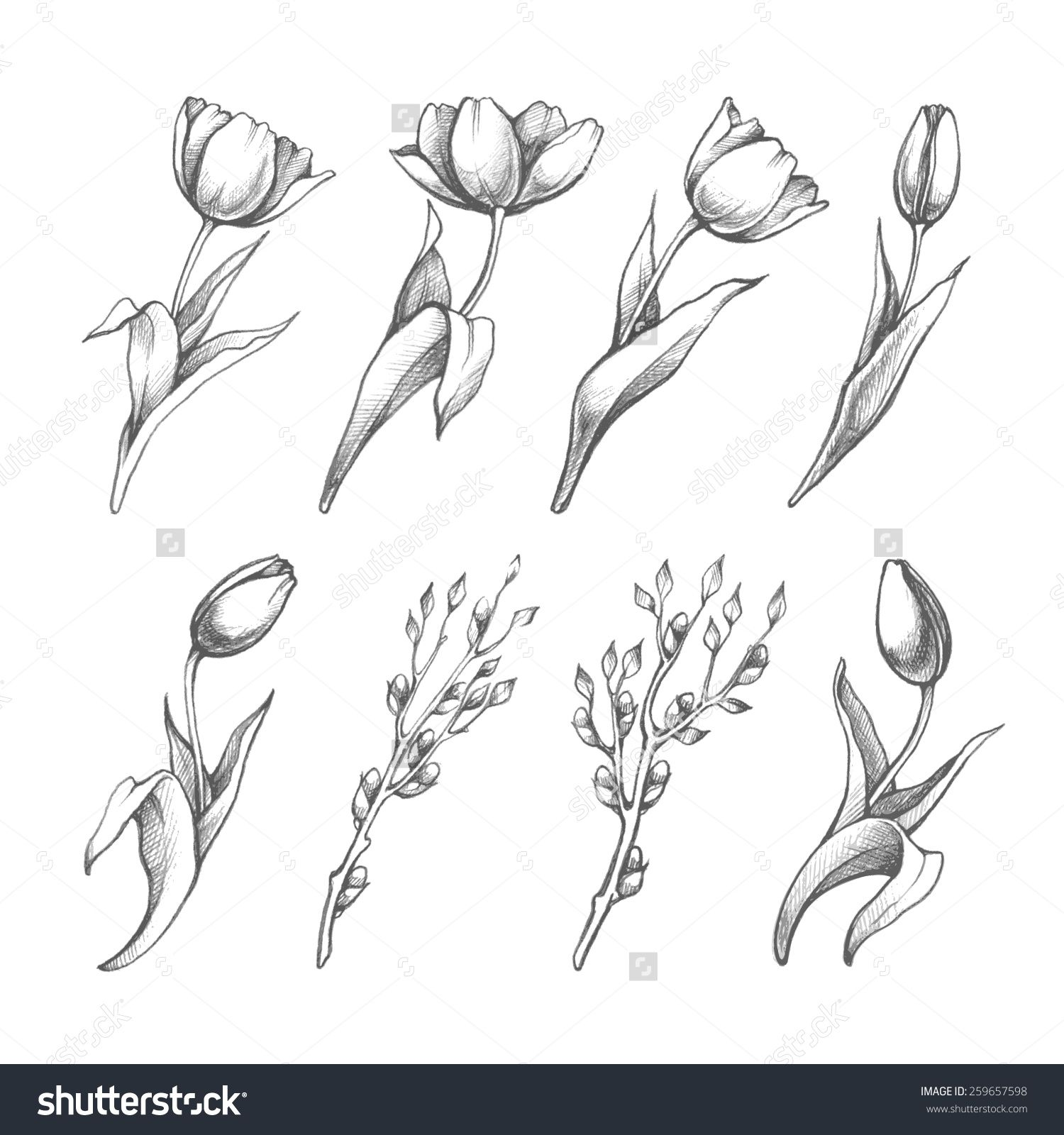 Set Of Spring Flowers Tulips Branches Pencil Sketch Collection Vector Illustration Flower Sketches Tulip Drawing Tulip Tattoo