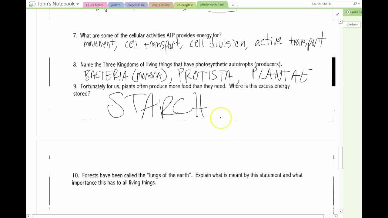 Photosynthesis Worksheet Answer Key Beautiful Answers Synthesis Worksheet In 2020 Photosynthesis Worksheet Algebra Worksheets Pre Algebra Worksheets