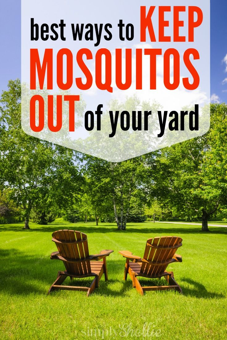 How to Keep Mosquitos Out Of Your Yard This Summer   Yard ...