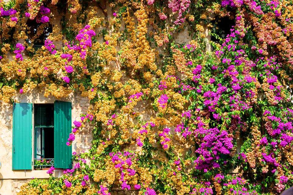 Colours, flowers, Lago di Garda, Italia #lagodigarda #lakegarda #gardasee #gardameer
