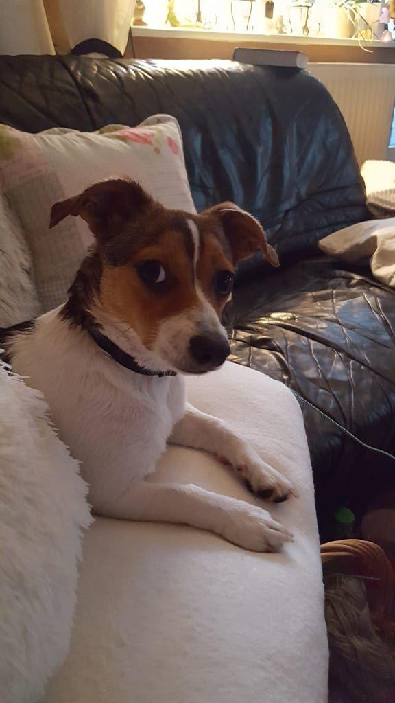 Hunde Foto Christiane Und Tessa Ich Mach Dem Duschen Hier
