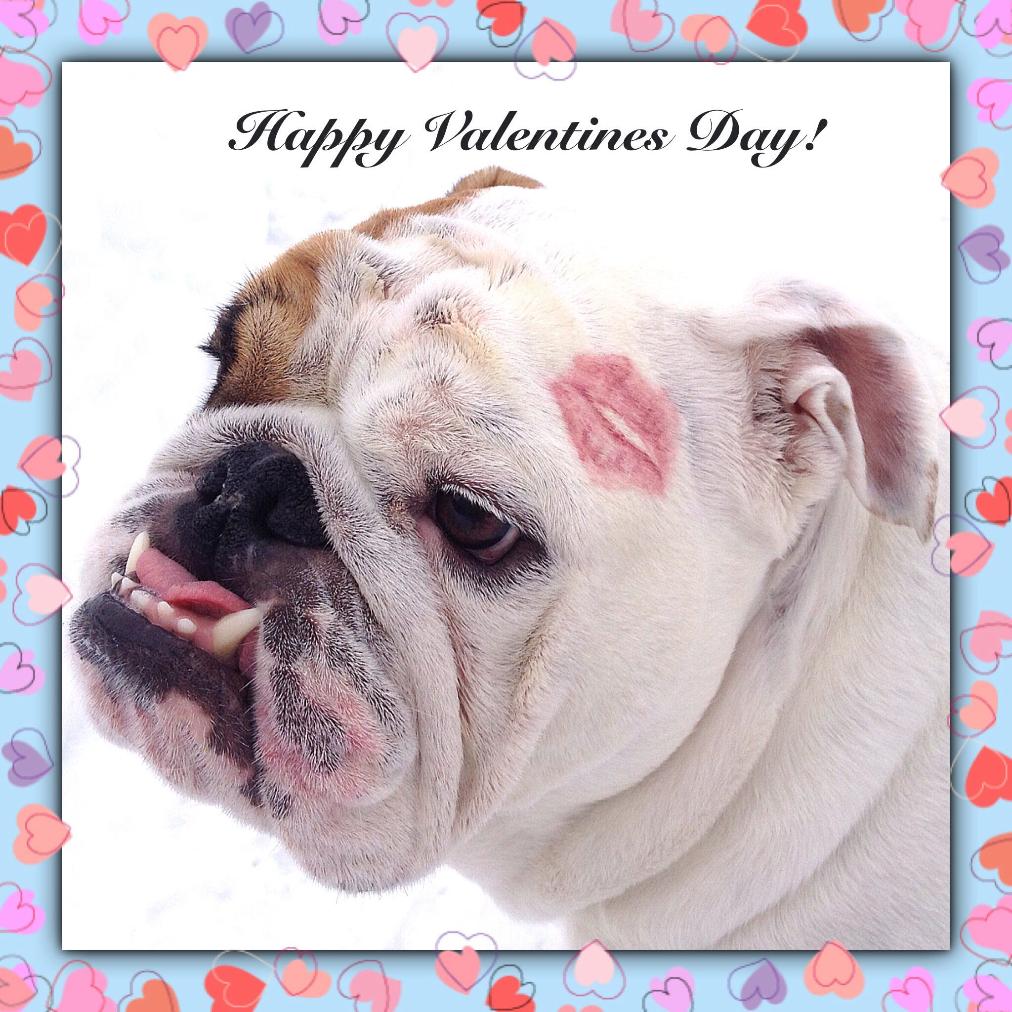 Sending Kisses And Happy Valentines Wishes To All My Bulldog