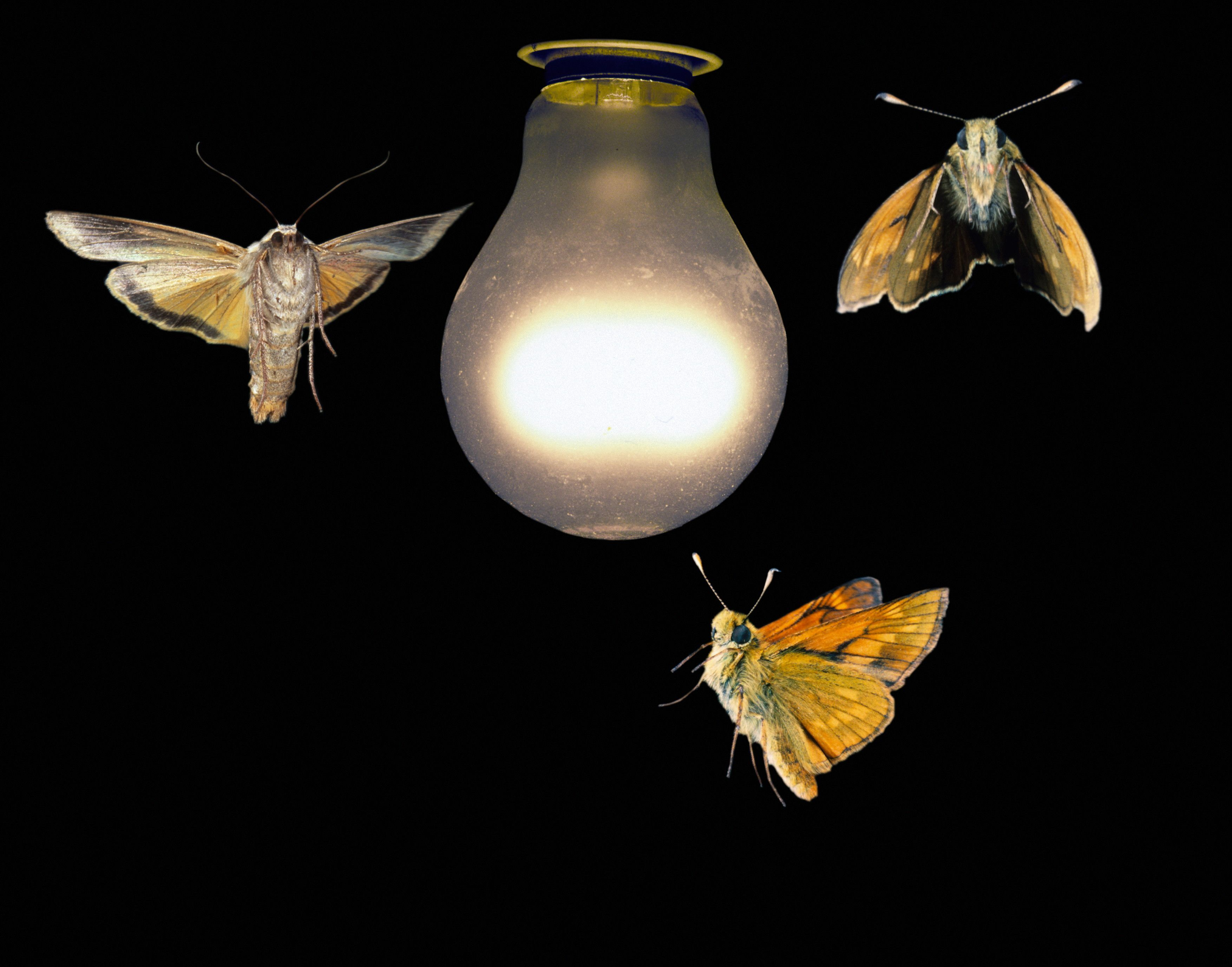 Lights With Moths Flying All Around Google Search Moth Fly