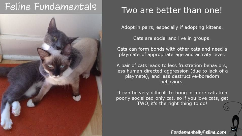 Pin by North Toronto Cat Rescue on Cat Explained | Cats ...