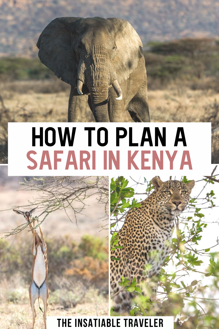 Traveling to Kenya for a safari? Here's your ultimate guide to plan a safari in Kenya. How to plan your first safari in Kenya: The Beginner's Guide to Planning a Safari in Kenya. This article highlights everything you need to know before your Wildlife Safari in Kenya. Photography and packing tips, recommendations, where to go and more! #Kenya #Safari #Africa | Kenya Safari | Where to go in Kenya | Kenya Packing List | Kenya Safari Travel Tips | Kenya Safari Travel Guide |