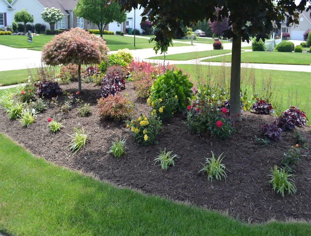 Landscaping With Evergreens And Grasses : Landscape designs shrubs landscaping forward best foundation