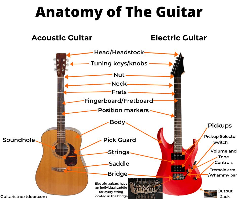 Anatomy Of The Guitar Playing Guitar Guitar Guitar Songs For Beginners