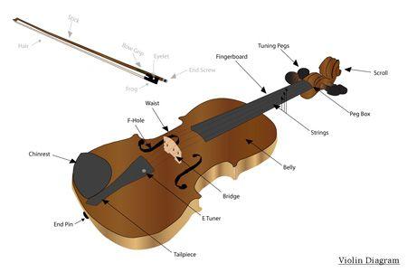 030910 ViolinDiagram | Parts of the violin | Pinterest ...
