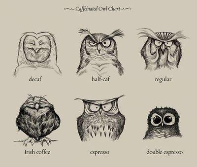 Caffeine Owls