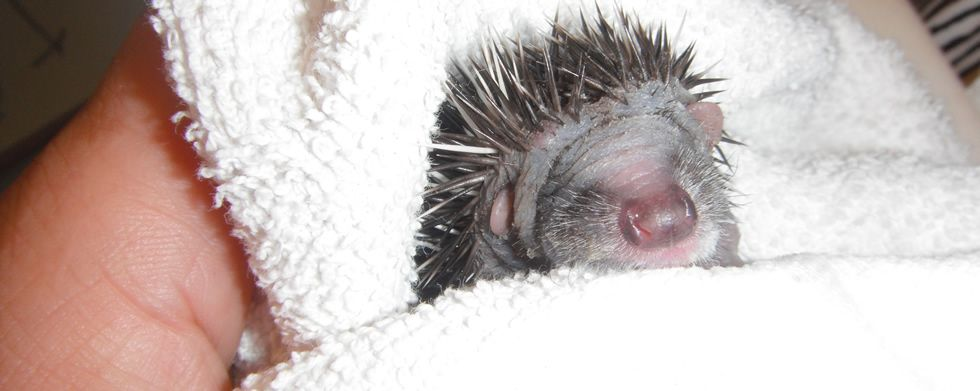 Emergency care for injured and orphaned wildlife