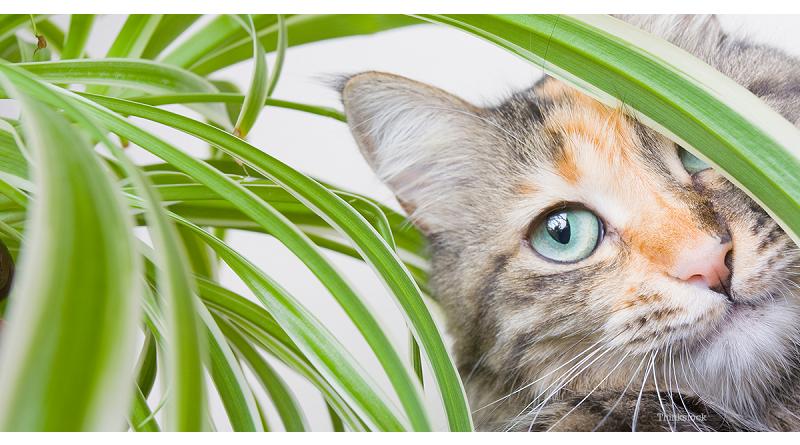 Piante Da Appartamento E Gatti.Piante Tossiche Per I Gatti L Elenco Completo Piante Ragno