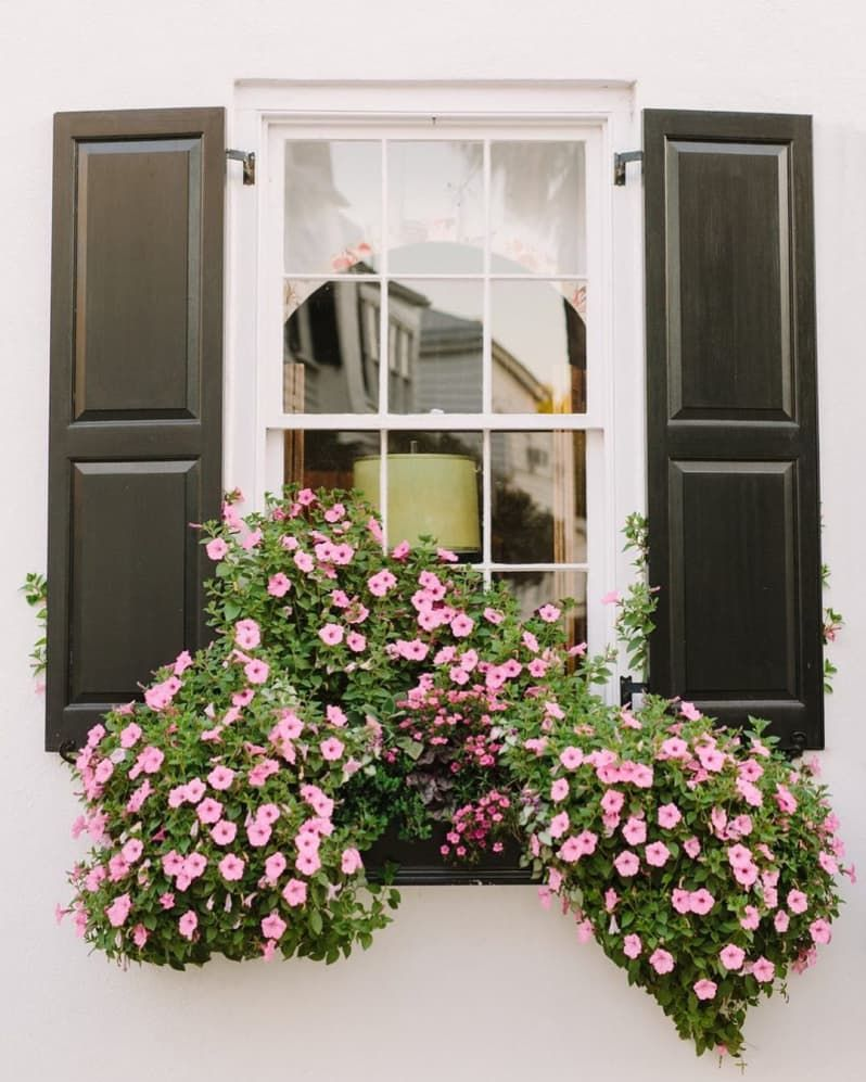20 Window Box Flower Ideas - What Flowers to Plant in Window Boxes |…