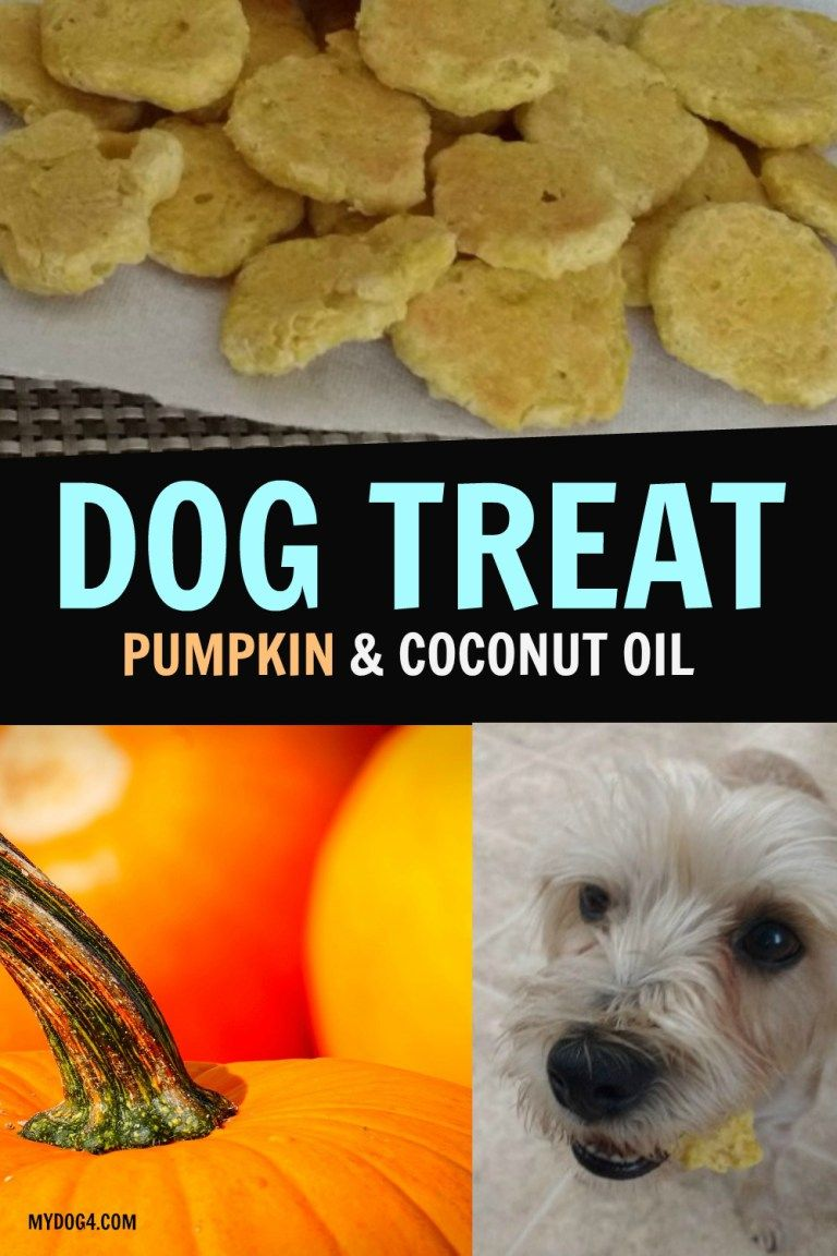 Dog Treat Pumpkin Dog Treats Dog Biscuit Recipes Dog Cookies