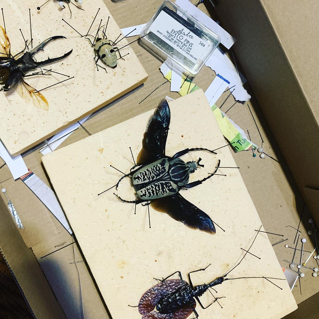 New Beetles Are In Natureart Insectcollecting Entomology Natur