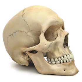 People Png Images Free Picture Download Human Body Unit Skull 3d Human