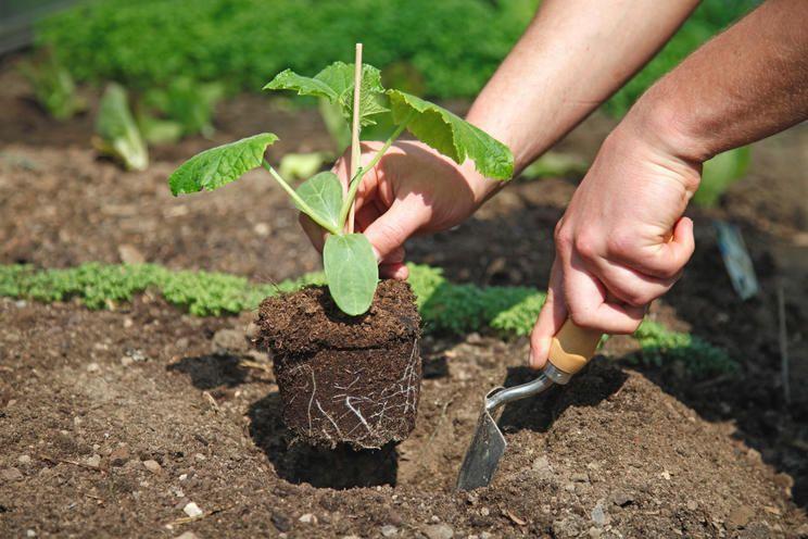 Die 5 Grossten Fehler Beim Gurken Anbau Gurkenpflanze Gemuse Anpflanzen Gurken Anbauen