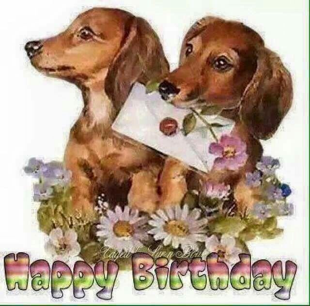 Birthday Birthday Dachs Pinterest Birthdays