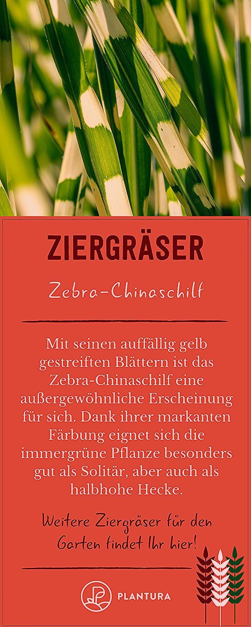 Photo of Ziergräser für den Garten: Die 10 schönsten – Plantura