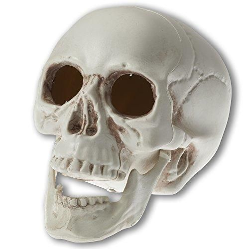 Prextex 65 inch Realistic Looking Skeleton Skull for Best Halloween - skull halloween decorations