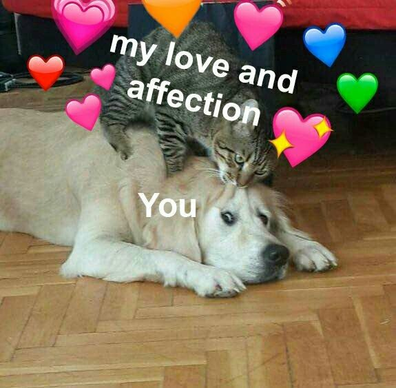 Pin on Love You Memes