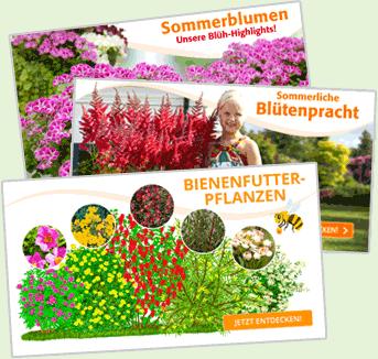 Rankgitter Blatt Sambucus, 197x65 cm, Lärchenholz, natur online kaufen bei Gärtner Pötschke