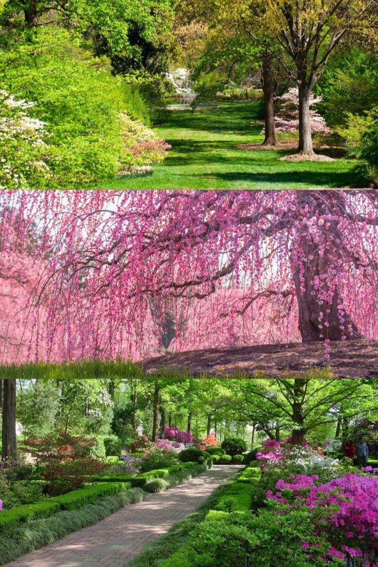 National Arboretum Washington D C Usa Washington Dc Tours Dc Tours Travel Activities
