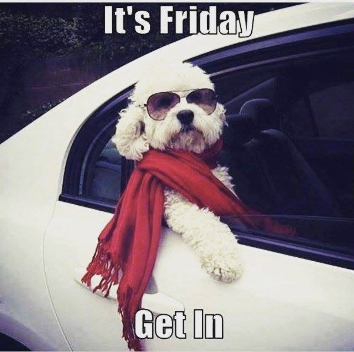It S Friday Get In Funny Animals Dogs Cute Dogs