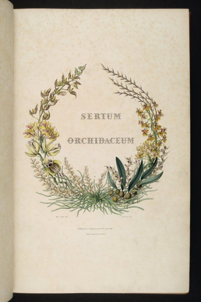 Sertum Orchidaceum John Lindley Vintazh