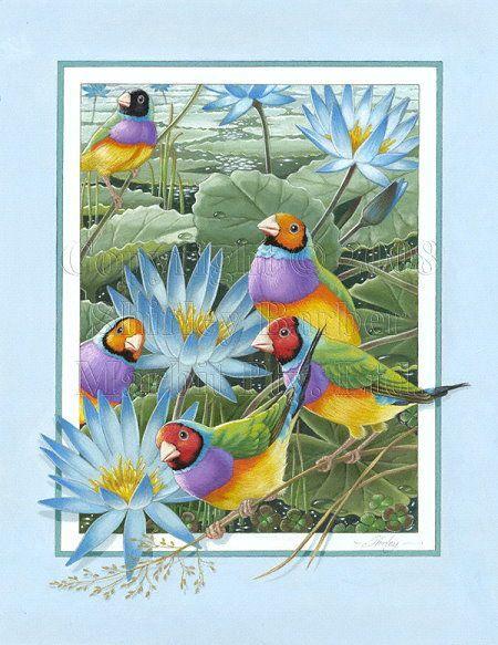 shirley barber birds | Uploaded to Pinterest
