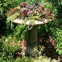 Upcycled an old, leaky birdbath into a beautiful succulent garden! I m…